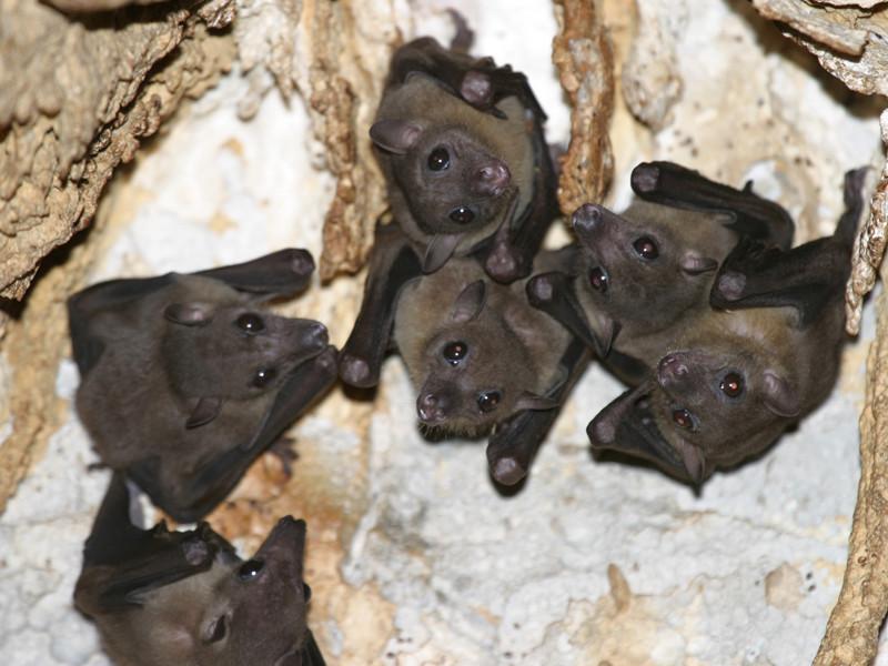 Habitat of bats.
