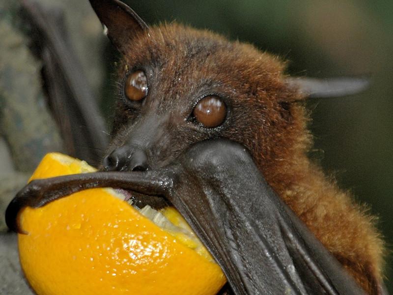 Diet of bats.