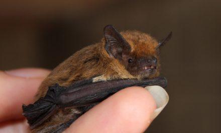 Murciélagos y Seres Humanos