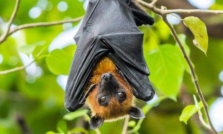 Murciélagos en la Mitología