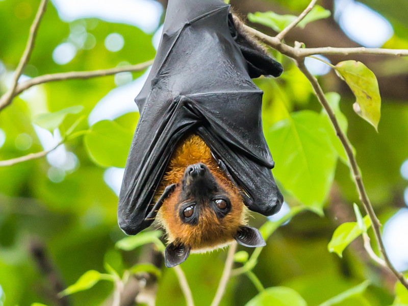 Bats in Mythology