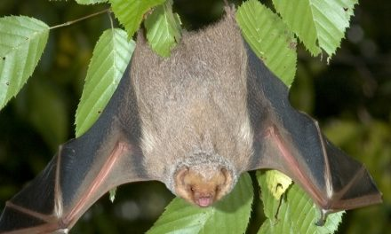 Bat Role in Pollination